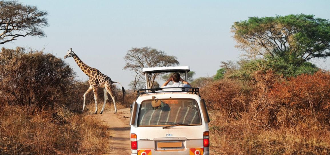 Safari, Afrique du Sud