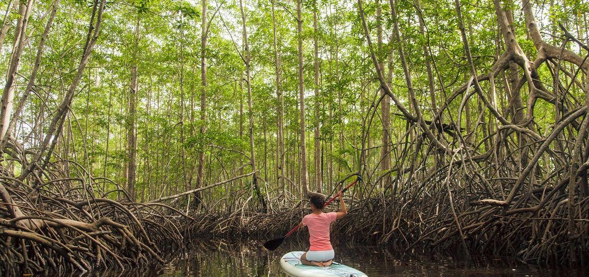 paddle, mangrove