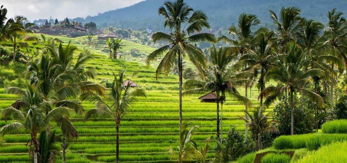 Rizières, Bali, Indonésie