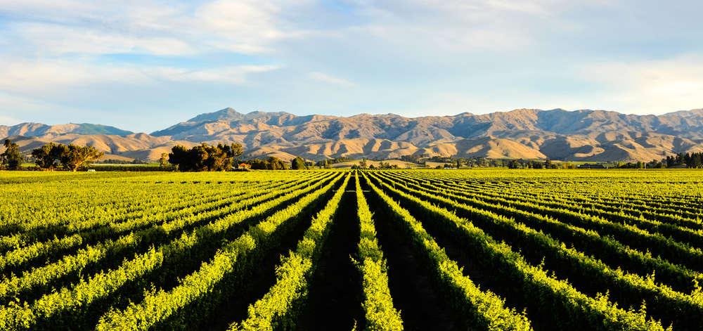 Vignobles de Blenheim, Nouvelle-Zélande