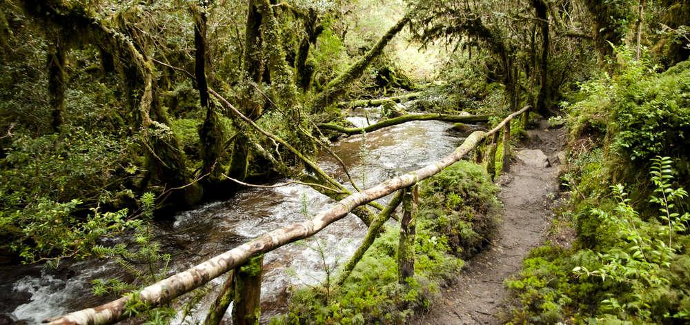 Forêt Enchantée du Parc National de Queulat
