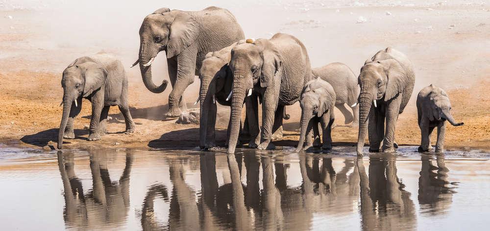 Eléphants d'Etosha
