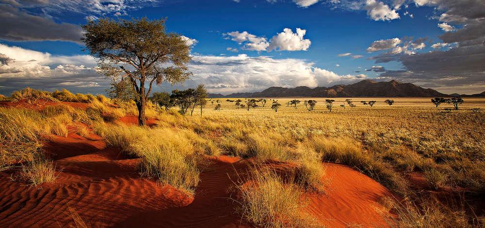 Entre Bush et Désert du Namib