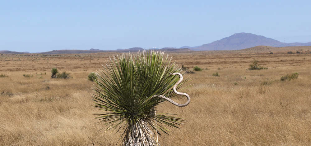 Chihuahuan Desert, Marfa, Texas