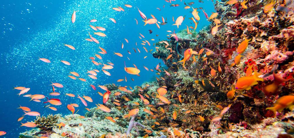 Récifs de Zanzibar