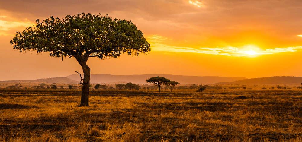 Coucher de Soleil sur le Serengeti