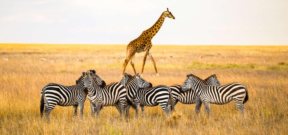 Faune du Serengeti