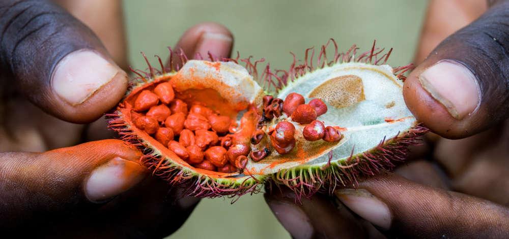 Épices de Zanzibar