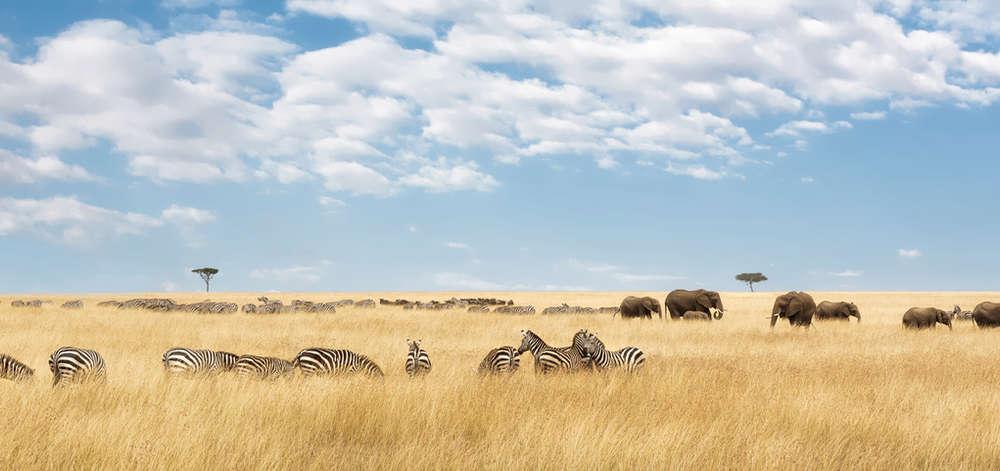 Plaines du Masaï Mara