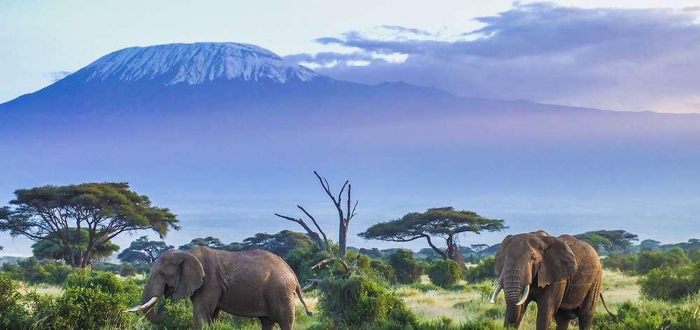 Éléphants devant le Kilimandjaro à Amboseli