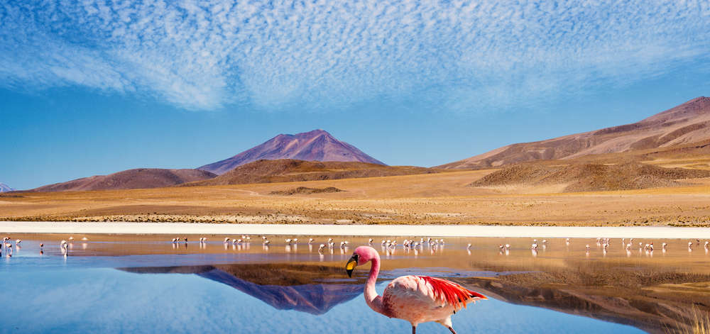 Flamants roses de l'Atacama