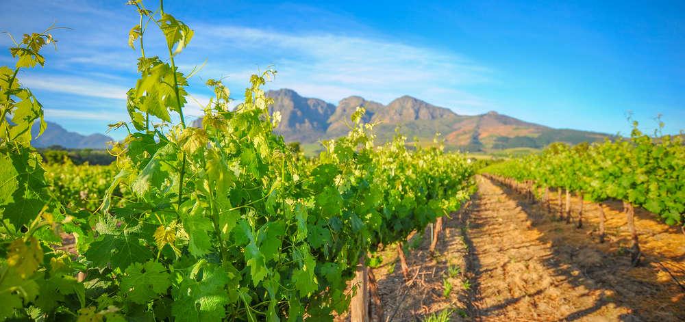 Vignobles de Franschhoek
