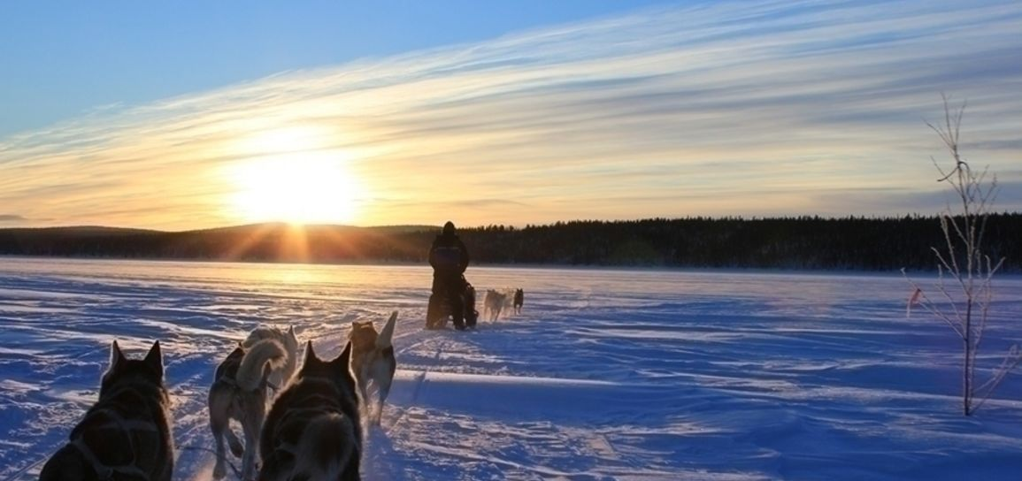 chien de traîneau, Laponie